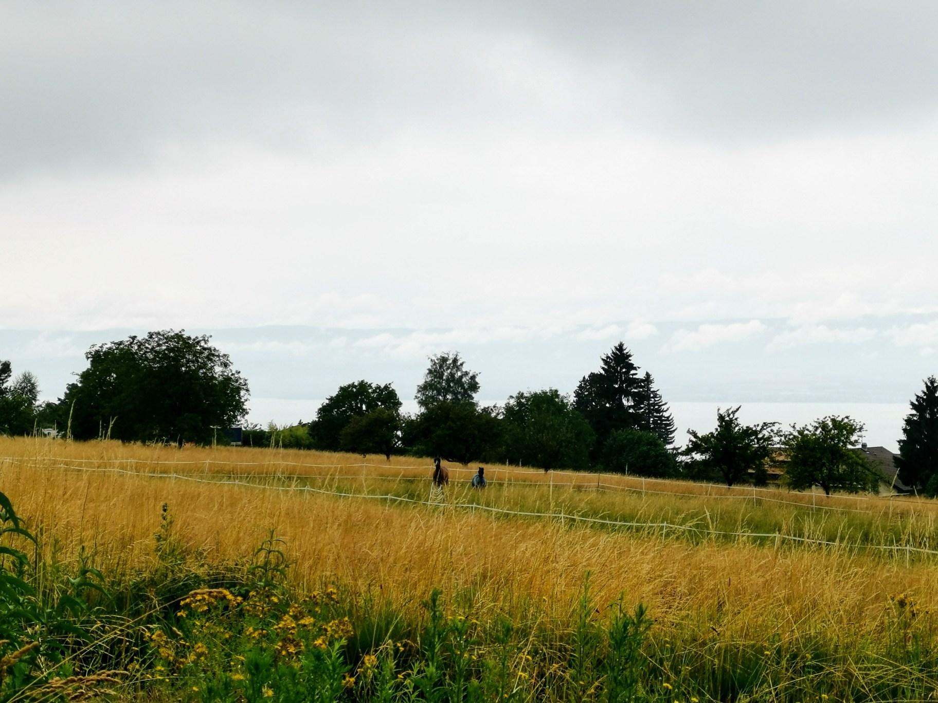 Evian, vue du Manoir des Tours © Corinne Martin